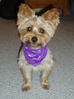 Bailey the dog: Hoffman Estates, IL